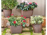 Set Of 4 Rattan Planters
