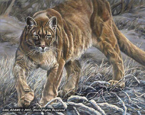 Majestic Prowl by Gail Adams Limited Edition Print  PP  8 / 10