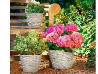 3 wicker planters