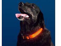 Light-Up Pet Collar