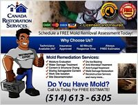 Montreal Mold Removal Contractor-Offering Mold Remediation