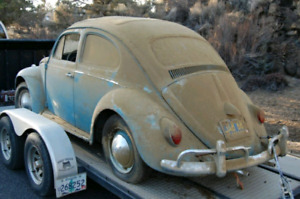 Looking for  bug /beetle parts / parts cars.