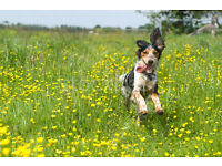 LAND/YARD/FIELD WANTED FOR PRIVATE DOG WALKING
