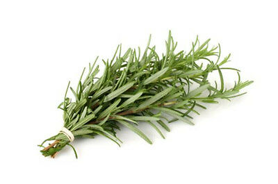 55mg CERTIFIED ORGANIC Rosemary Seeds ~40 Count Perennial Garden Savory Herb