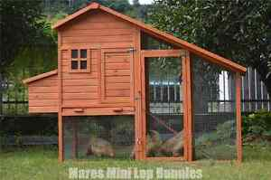 ♥♥♥ Large Slopped Roof Rabbit Hutch / Chicken Coop ♥♥♥ Londonderry Penrith Area Preview