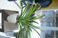 Plantes d'appartement variées
