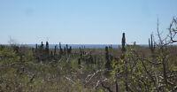Lot 1289, Los Cerritos, Baja California Sur, MX
