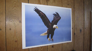 The-American-Bald-Eagle-Great-Flying-POSTER