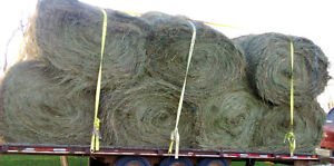 High Quality Round Bales for Horses