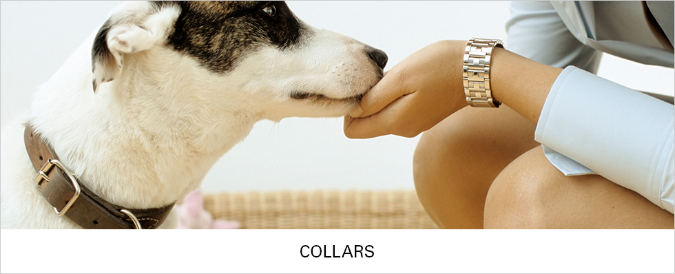 Dog Collars | Shop Now