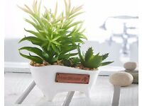 Artificial Cacti in a Bathtub
