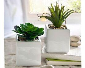 Set of 2 Cacti (NEW)