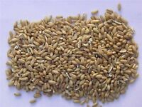 Oats barley mix