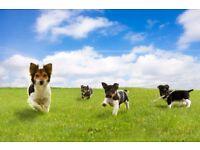 Happy dogs! Dog walking in Stamford bridge
