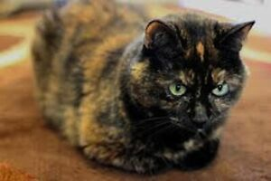 Penny. Great Companion Cat For Senior – For Adoption