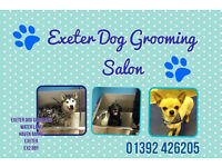Exeter Dog Grooming Salon open 8am-6pm