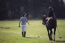 Horse Reduction SALE - TB's (Bannockburn VIC) Lethbridge Golden Plains Preview