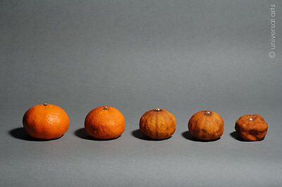 MARIO STRACK - Mandarine 3 Artcard Bild Karte Stilleben Bilder Obst