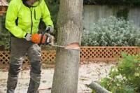 DO YOU NEED A TREE REMOVED?  SALE TODAY