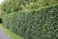 Hedge Trimming: Cobourg ,Port Hope,Welcome and surrounding area.