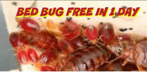 Single day bed bug heat treatment