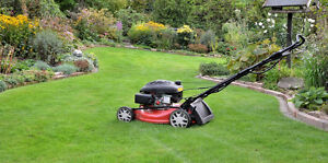 Eddy's Lawn Care and Maintenance
