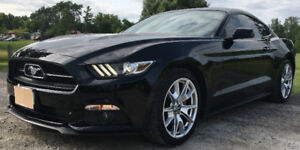 50th Anniversary 2015 Mustang Fastback, Ecoboost, Premium Pkg