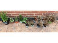 Perennial plants assorted x 14