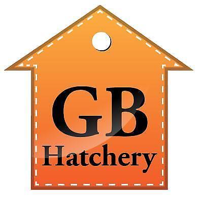 gbhatchery