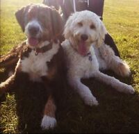 Pro Dog Walking Services - Leash Walks and/or Off Leash Park