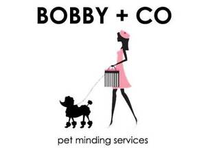 BOBBY   CO -- Dog Minding Services And More! Maroochydore Maroochydore Area Preview