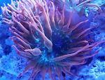 Premium_Aquacultured_Corals