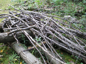 do you Need your Branches hauled away?