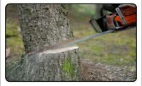 Rockway Tree Service  we do cutting, trimming and removals