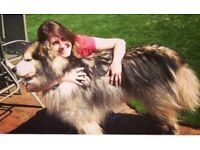Reliable Dog Walker / Pet Sitter - Dog walking, Dog sitting - Do what you love and be happy!