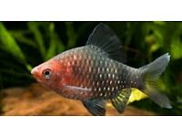 4x beautiful tropical fish for sale only £5