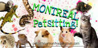 Pet sitting on Montreal !!