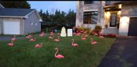 Installation flamants roses et affiches de fête dans Gatineau