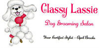 Classy Lassie Dog Grooming - Great Rates!