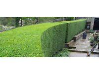 Derby - Gardening Services - Lawn Mowing/Hedge Cutting/General Garden Maintenance/Landscaping