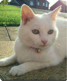 Lost Cat - Tilly - Pure White