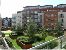 Oceana Boulevard 1 bed apartment. Great location with gym. Electric included!