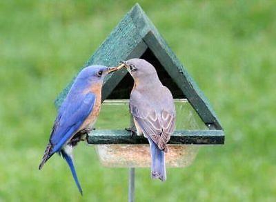 GC - Songbird Essentials - Multi Purpose Chalet w/ Stick Bird Feeder