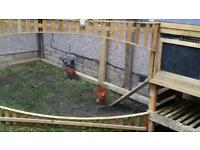 Hens and coop for sale