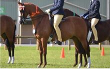 13'3hh chestnut riding pony Baldivis Rockingham Area Preview