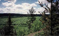 HUGE 590 Acres Surrounded by Crown Land-Water, Trees, Fenced