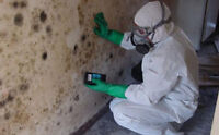CERTIFIED  Mould Removal Technicians and Supervisors Needed