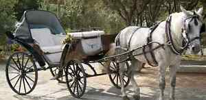 Looking to rent horse amd carriage