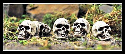 Skull set of 5 for Miniature Garden Fairy Faerie Gnome Hobbit Fairy GO 16497