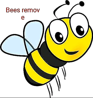 Wanted: Bees Removel